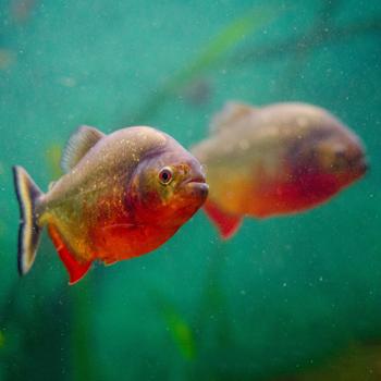 Vissen en aquaria