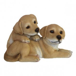 Puppies liggend